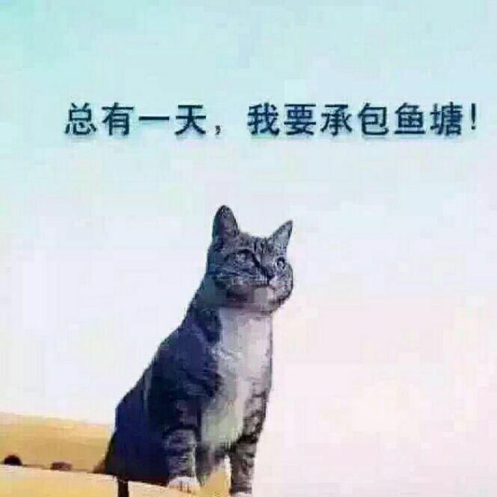 小白兄VP