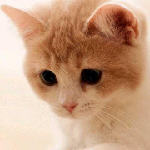 幸福就是猫吃鱼36571