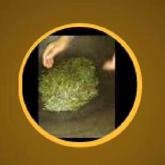 自重的绿茶