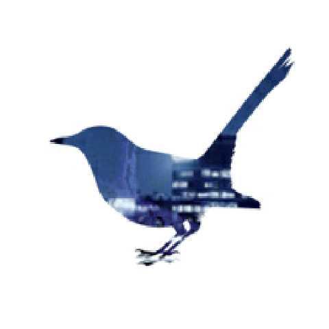 飞翔的迪基鸟