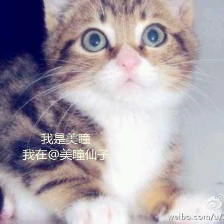 美瞳仙子1495022041399488