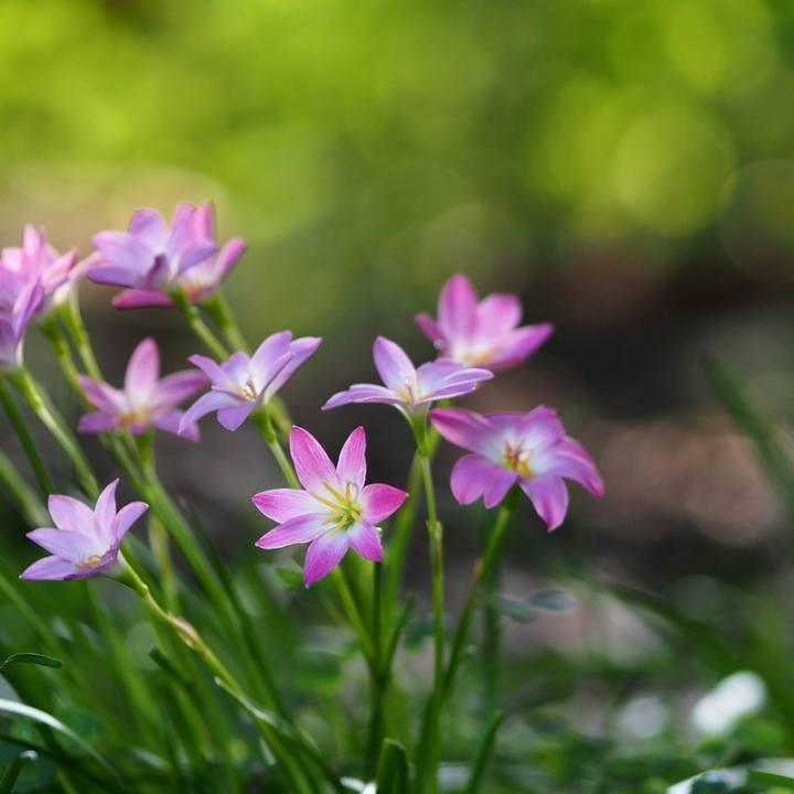 紫星07605