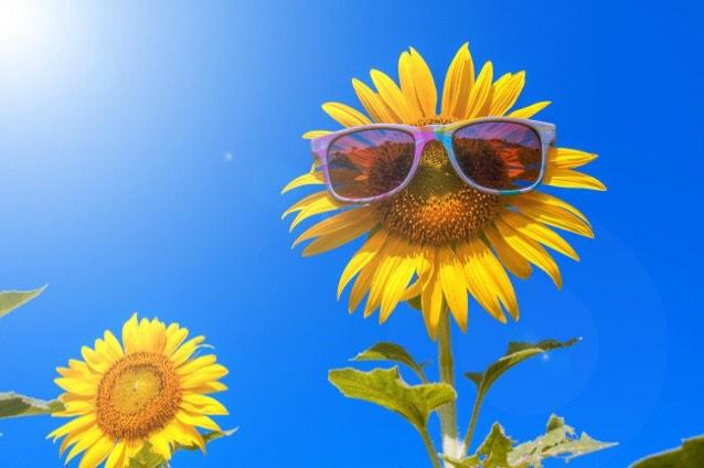 向日葵的微笑4158
