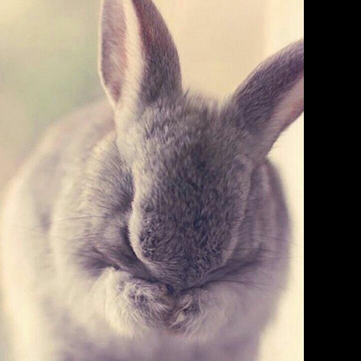 蔡兔子18