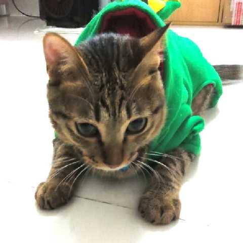 喵猫cat28734