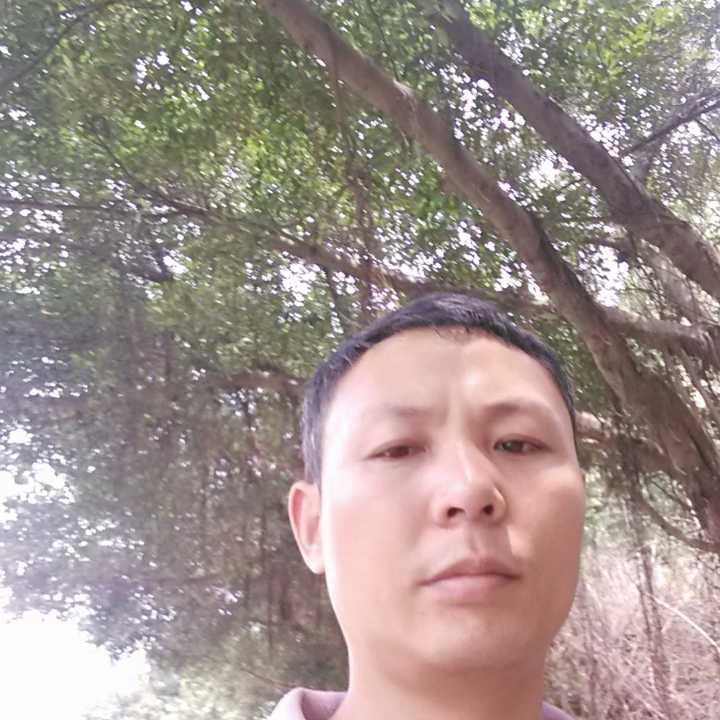 云南凤庆大叶种茶