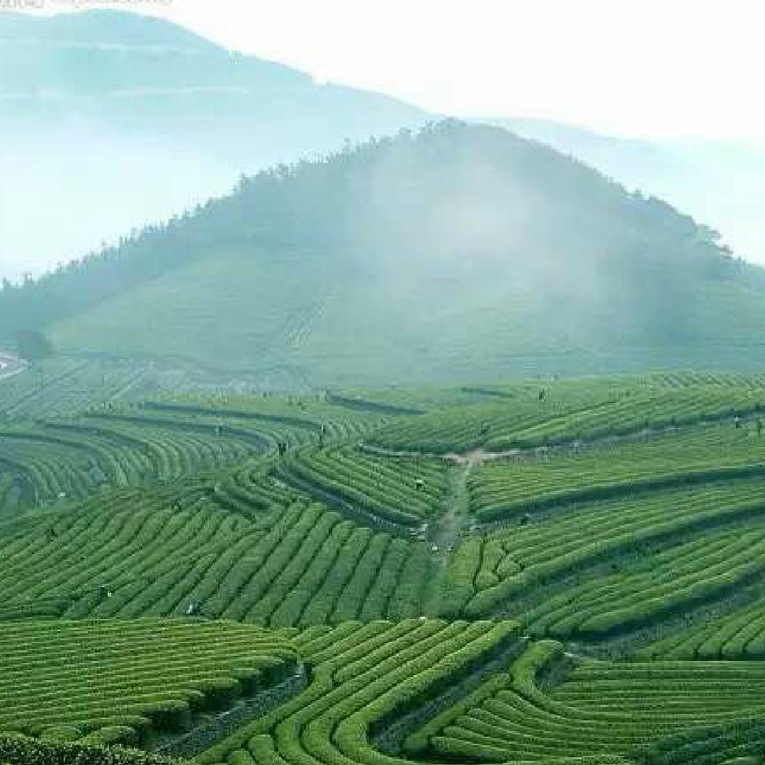 溪湘缘茶业