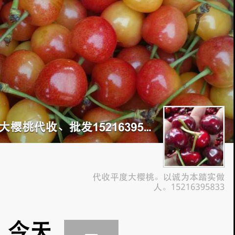 大樱桃专卖
