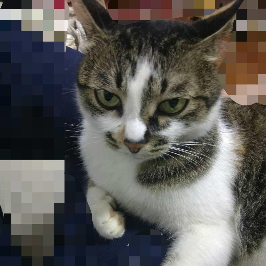 大猫80454