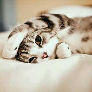 猫猫1481944585040874