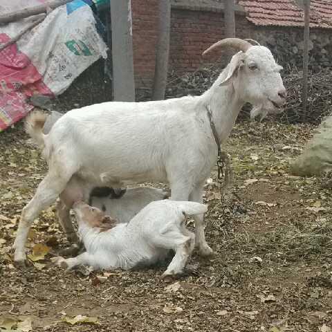 羊羊羊1482492773740655