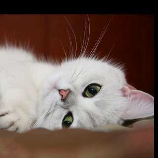 懒懒猫1482598926674163