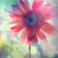 s2flower