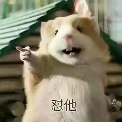 刘美娇58728