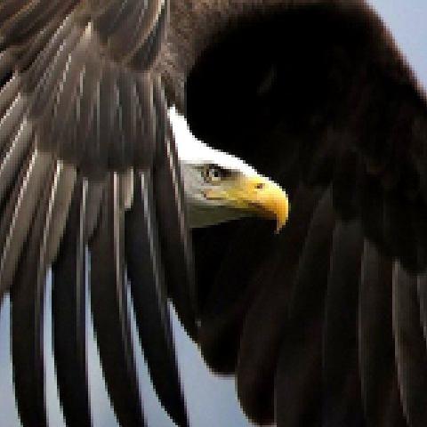 鹰5505145971