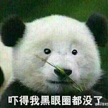 熊猫52711