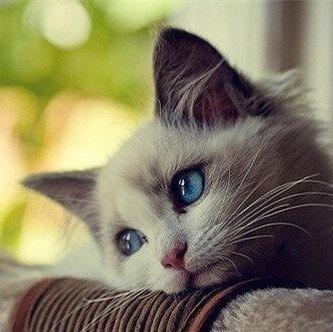 踏仙君的白猫师尊
